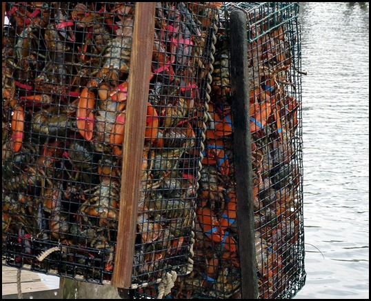 09e - Perkins Cove - That's a lot of Lobsters