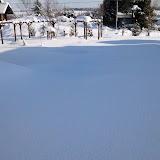 2012年1月19日の庭