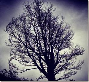 Árvore Autor Freddy Duclerc
