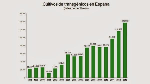 transgenicos-en-Espana