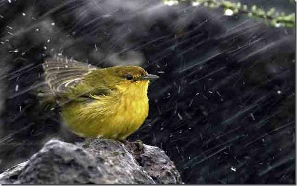 Lindas fotos da chuva (23)