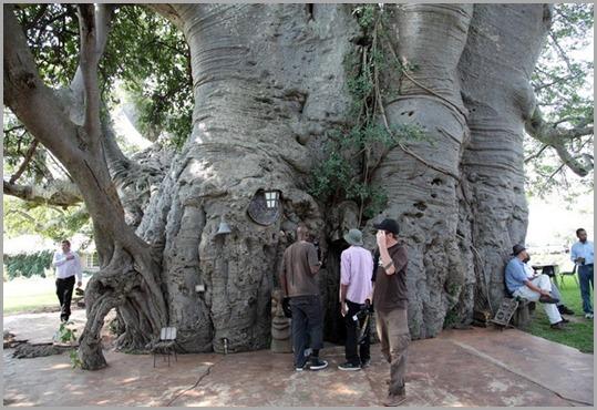 sunland-baobab-76 (1)