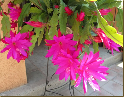may flowers 022