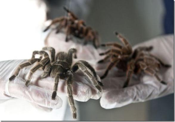 spider-farmer-juan-13
