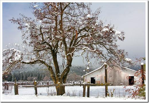 120413_snow9
