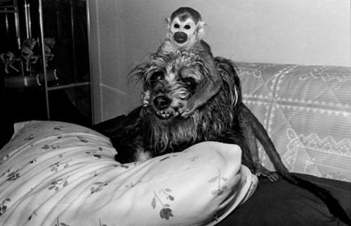 primateportraits7jpg