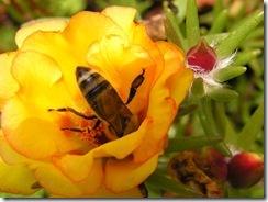 včely na květech 101