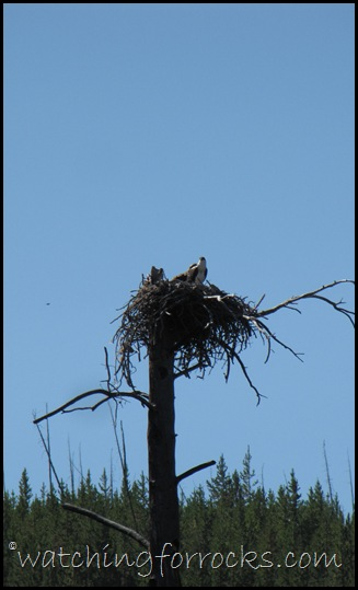 IMG_3372Osprey Nest