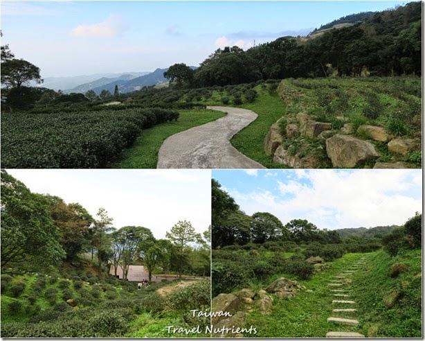 三峽熊空茶園 (48)