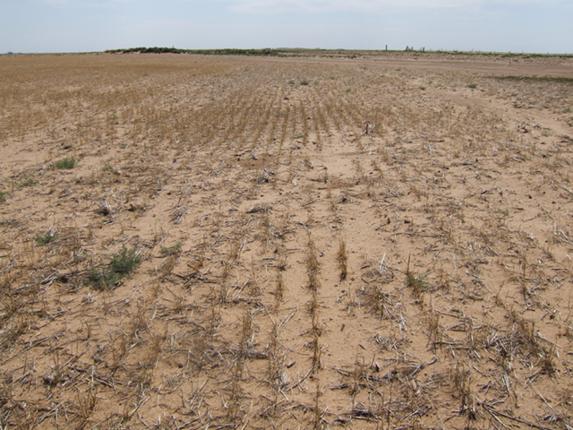Failed wheat crop in a dryland farm in Cotton County, Oklahoma, January 2011. The drought may push many farmers and ranchers into foreclosure on farm and ranch equipment and land used as collateral to back bank loans taken to finance their 2011 farm and livestock operations. survivalfarm.wordpress.com