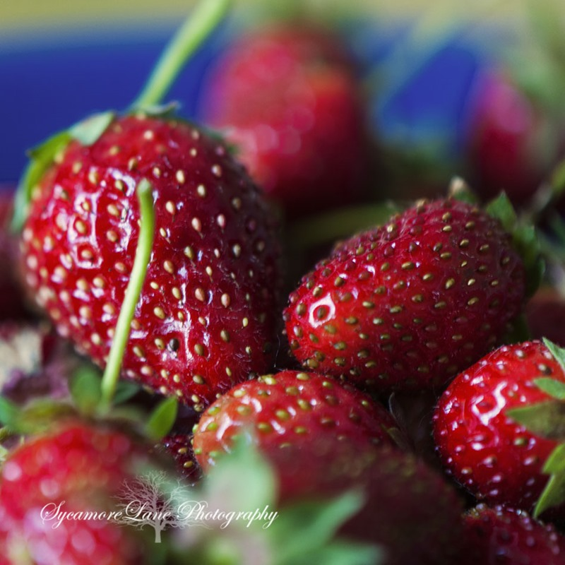 SycamoreLane Photography- strawberries