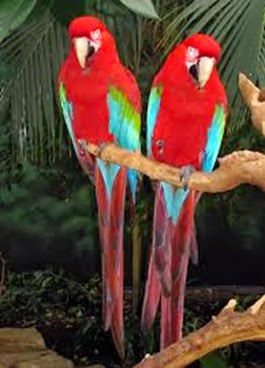 Amazing Pictures of Animals, Photo, Nature, Incredibel, Funny, Zoo, Red-and-green Macaw, ara chloropterus, Bird,  Alex.  (18)