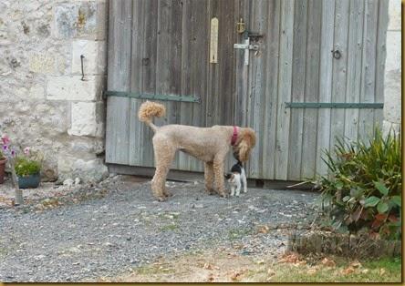 Lulu meets Daisy9b