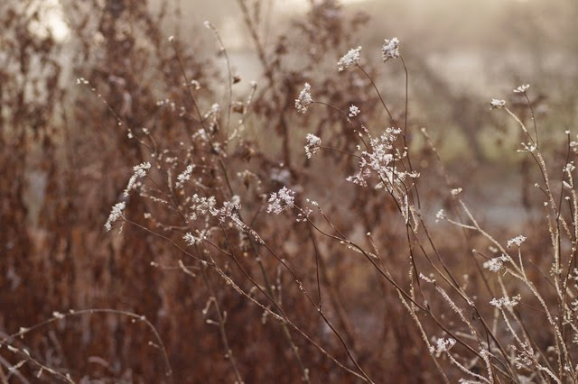 Heavy frost frozen winter Norfolk countryside landscape