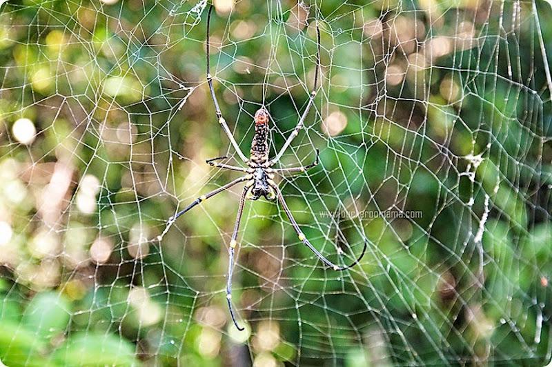 Spider-(1)