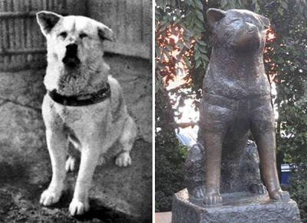 6- O cão Hachiko, da raça Akita