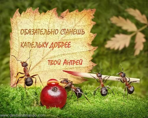 formigas inacreditaveis incriveis desbaratinando  (3)