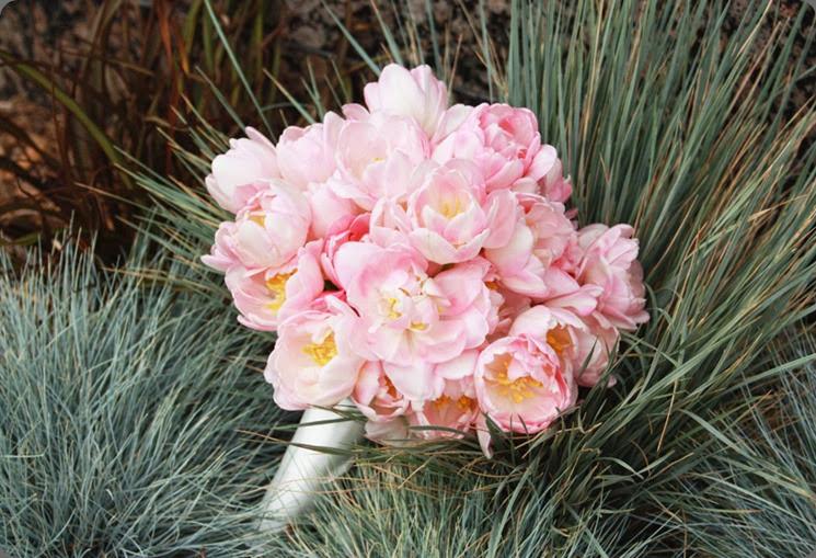 tulip pink-tulip-bouquet1 karen tran