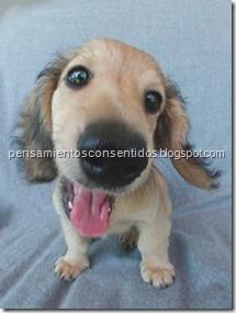 1220463842_puppies-41