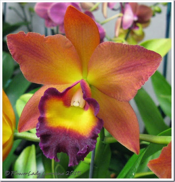 02-08-orchids9