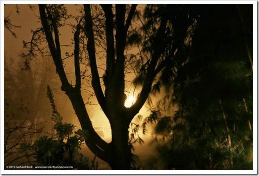 150123_fog_night5