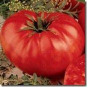 Beefsteak_Tomato_Seeds