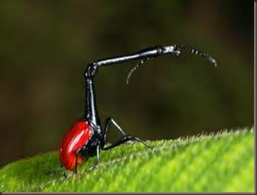 Amazing Pictures of Animals, photo, Nature, exotic, funny, incredibel, Zoo, Giraffe weevil, Insecta, Alex (11)