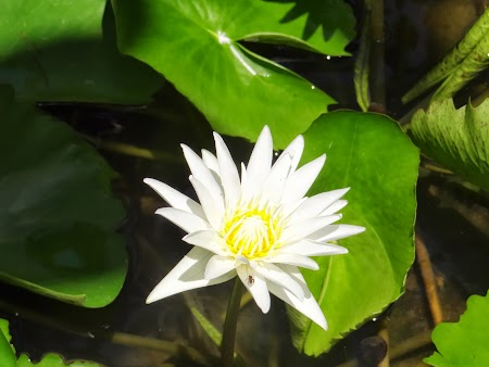 09. Floare de lotus.JPG