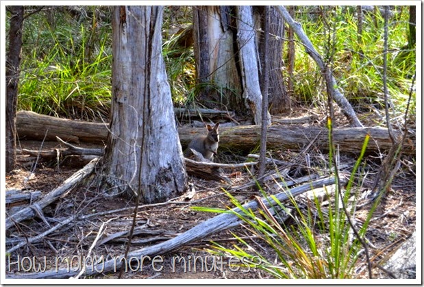 How Many More Minutes? ~ Douglas-Apsley National Park, Tasmania