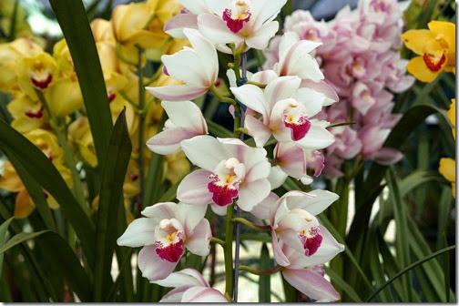Festival de Orquídeas em Teresópolis 5