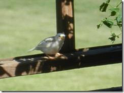 White bird 010