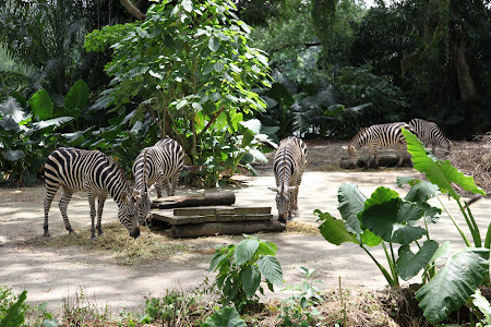 Photos of Singapore zoo
