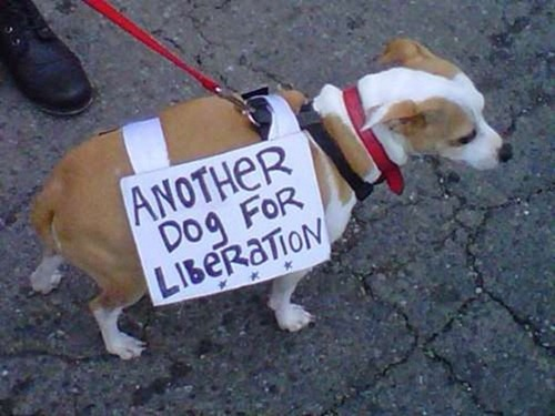 cute-pets-at-occupy-wall-street-21