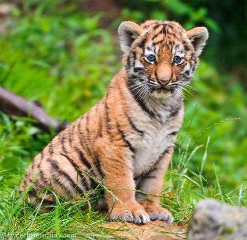 filhotes recem nascidos zoo zoologico desbaratinando animais lindos fofos  (39)