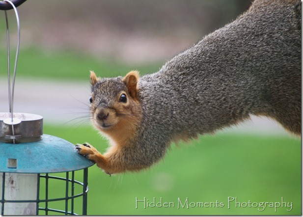 Day 106 - Squirrel! What Squirrel!