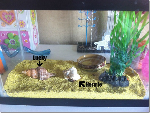 Lucky and Hermie