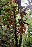 Abundant Plant Life at Waiseli Rainforest Preserve - Savusavu, Fiji