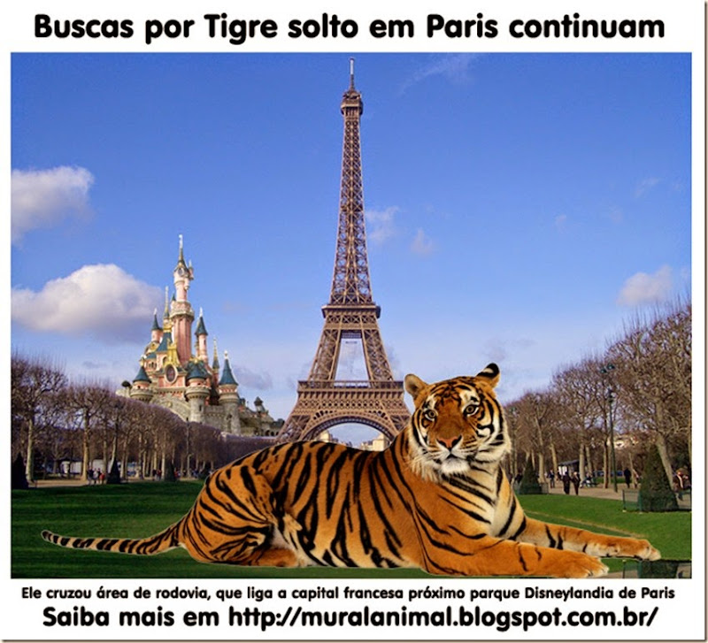 tigre-paris