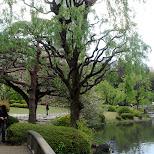 crazy trees in Shinjuku, Tokyo, Japan