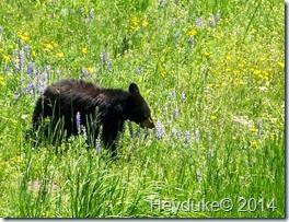 Yellowstone NP and Teton NP 046