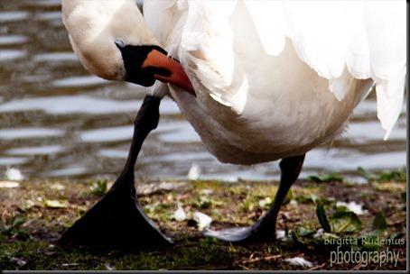 bird_20120424_svan