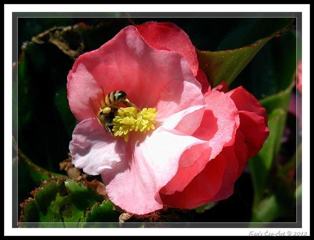 Bumble Bee 3