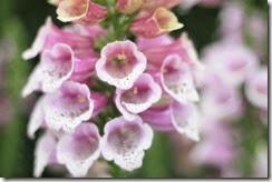 nybg-new-york-botanic-gardens-bronx-013