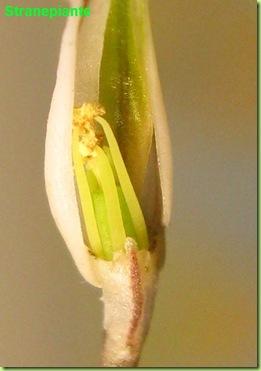 fiore rinomin