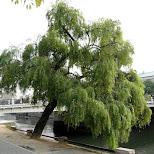 hiroshima in Hiroshima, Hirosima (Hiroshima), Japan