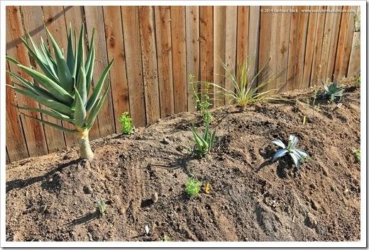 140316_desert_garden_planting6