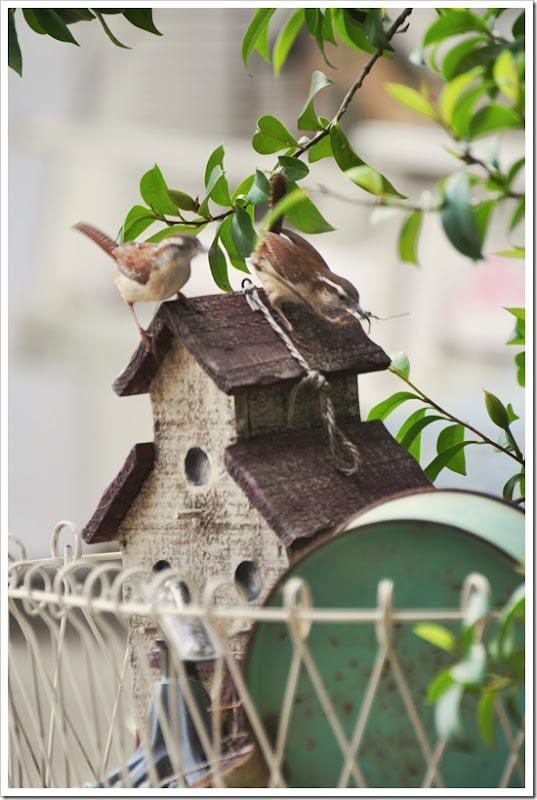 Wren nest building 027 allure