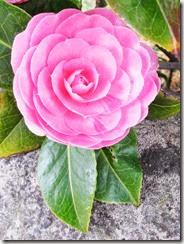 march-flower