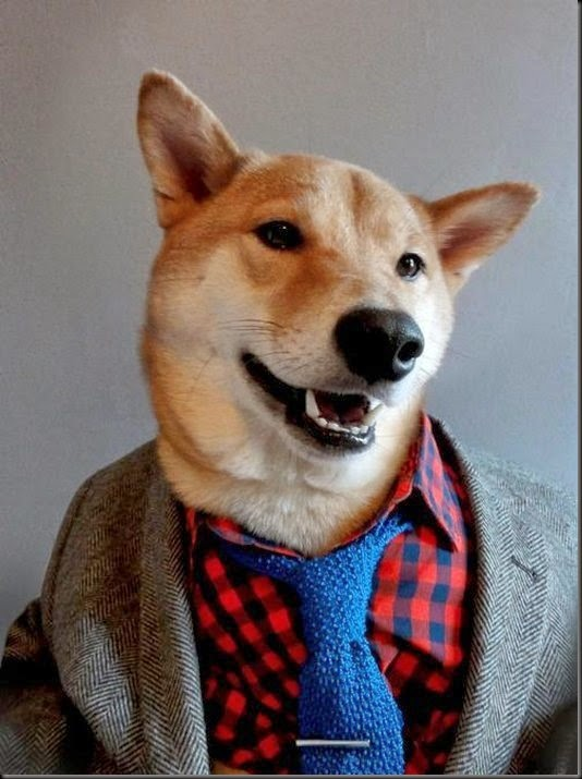 awesome-cute-menswear-dog-blog-funny-dogs4