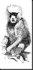 October 23, 2012 Babboon Sketch